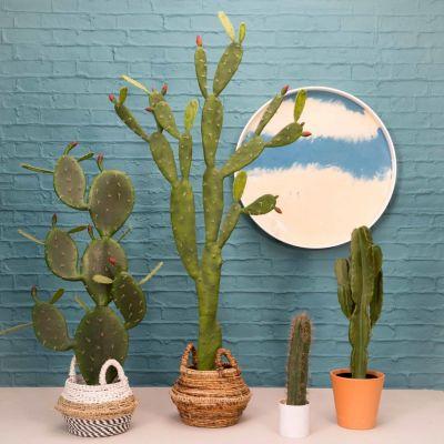 Fake Desert Cactus Plant
