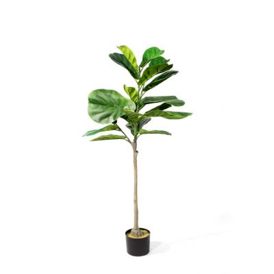 Fake Fig Leaf Tree