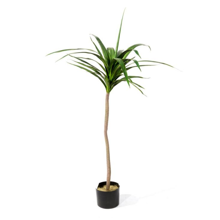 Fake Yucca Tree Artificial Trees & Plants £ 65.00 Store UK, US, EU, AE,BE,CA,DK,FR,DE,IE,IT,MT,NL,NO,ES,SE