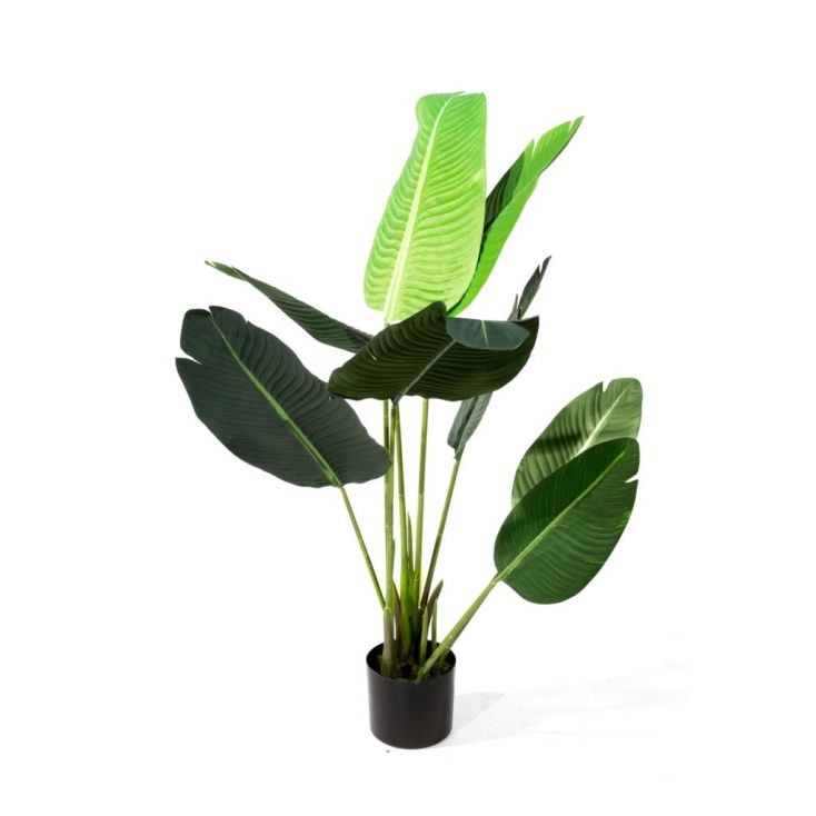 Bird Of Paradise Plant This And That £ 95.00 Store UK, US, EU, AE,BE,CA,DK,FR,DE,IE,IT,MT,NL,NO,ES,SE