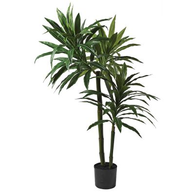 5ft Green Dracaena Plant