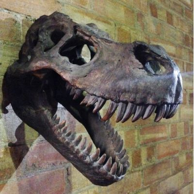 T - Rex Skull Trophy Head