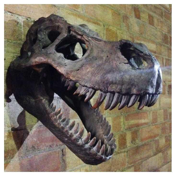 T Rex Dinosaur Skull