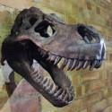 T - Rex Skull Trophy Head