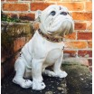 Antiqued English Bulldog