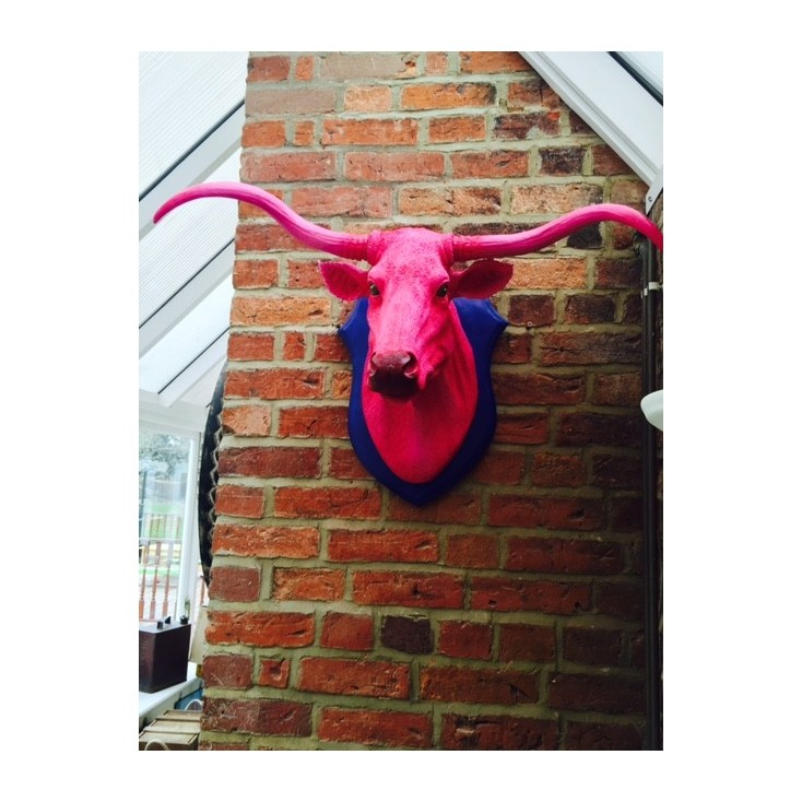 Pink Ox Trophy Head