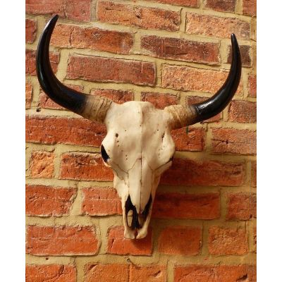 Bison Trophy Skull Head