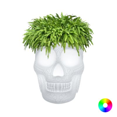 Skull Head Planter And Champagne Bucket