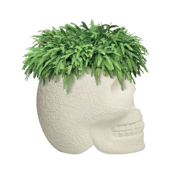 Skull Head Planter And Champagne Bucket Retro Ornaments £ 206.00 Store UK, US, EU, AE,BE,CA,DK,FR,DE,IE,IT,MT,NL,NO,ES,SE